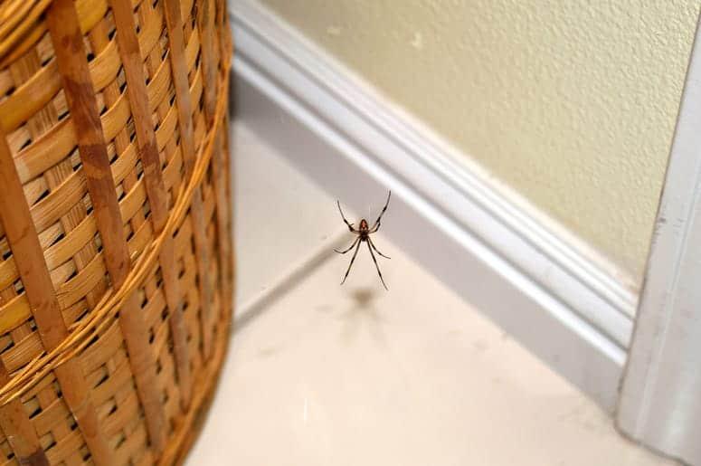 Spider Control Company San Diego